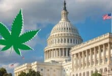 Photo of Cannabis Legalization Can Immensely Benefit Government